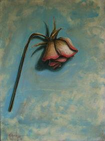 Rose by Panagis Antypas