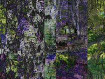 Birkenmuster von Kathrin Kiss-Elder
