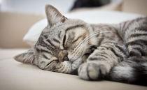 Sleepy Chucky by Pamela Kingsley