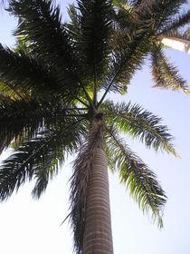 [Egypt] - Palm tree von Dave ten Hoope