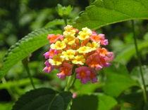 [Zanzibar] - Colourfull flower by Dave ten Hoope