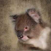 Cuddly Koala von Louise Heusinkveld