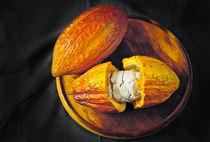 Cocoa fruit Mazorca de cacao by Juan Carlos Lopez