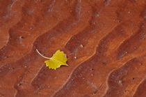Cottonwood Leaf by Barbara Magnuson & Larry Kimball