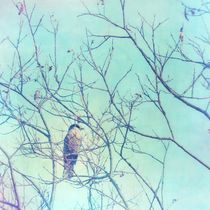 gray jay in a tree by Priska  Wettstein