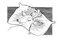 deer by Anna Ivanova