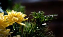 Le bouquet by Martin Heinz