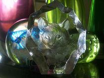 Glasscat-11