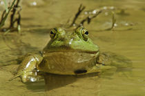 Bullfrog Smiles by Barbara Magnuson & Larry Kimball