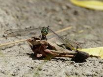 Dragonfly by Eduardo Ulrich