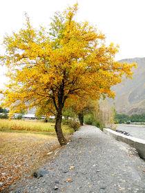 autumn by Muhammad Humayun Khan