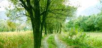 Road by Muhammad Humayun Khan