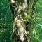 Livingtrees1