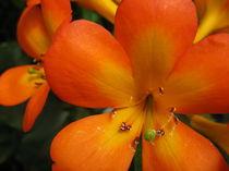 Delicate Orange Blooms von Larry Eiring
