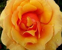 Livin' Easy Rose by Larry Eiring