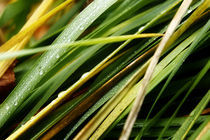 Grass no 2 by Agnieszka  Grodzka