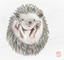 Baby Hedgehog by Lily S.H. Yiu