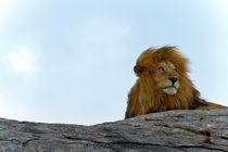 Lion King by Víctor Bautista