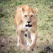 Lioness von Víctor Bautista