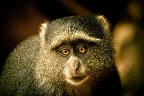 La mirada del mono by Víctor Bautista