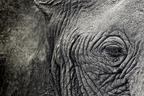 the eye of the elephant von Víctor Bautista