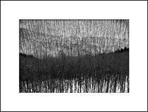 Winter forest by kallopeter