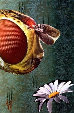 Pcela-i-cvijet-1
