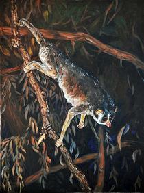 Schlanklori by Dorothee Rund