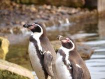 Penguins von Charlotte Fenner
