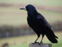 Crow  von Charlotte Fenner