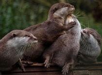 Otters von Charlotte Fenner