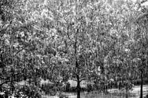 Rain by gnubier
