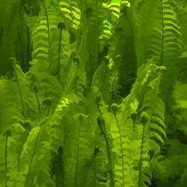 Green fern by gnubier
