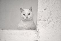 Weiß auf Weiß von Katrin Lantzsch