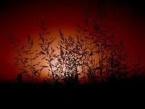 Red Dusk by Mihai Cîmpan