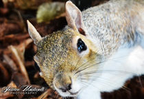 A close squirrel by Jessica Montanelli