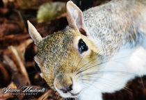 Squir2