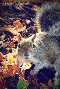 Wild Squirrel by Jessica Montanelli