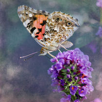 Painted Lady Butterfly von Betty LaRue