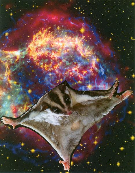 Vjeverica-leteca-u-svemiru-web