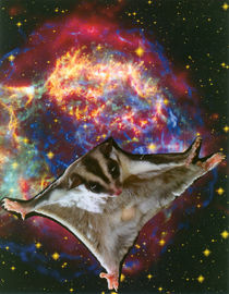 Flying squirrel in the universe by Natasa Stanisic