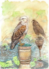 Vogelschau von Dorothee Rund