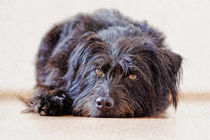 Dog on the floor. Kleiner schwarzer Hund by pahit
