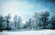 Frozen Landscape by Eva Stadler
