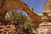 Natural Bridge by Barbara Magnuson & Larry Kimball