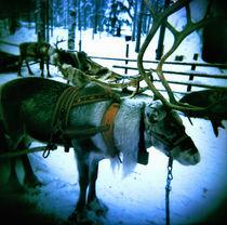 Lapland von Giorgio Giussani