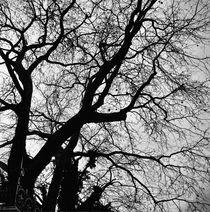 Tree by Giorgio Giussani