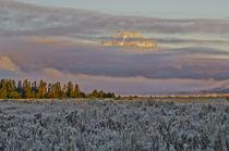 Mount Moran Sunrise von Barbara Magnuson & Larry Kimball