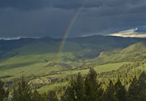 Rainbow over Yellowstone von Barbara Magnuson & Larry Kimball