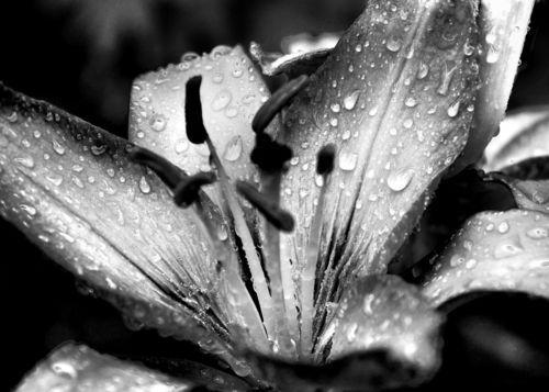 Infrared-flower2